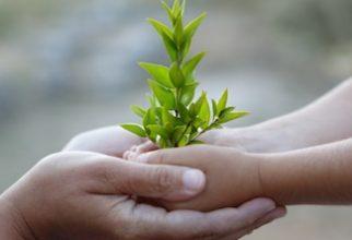 Abeceda zeliščarstva
